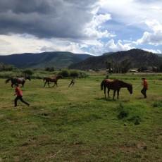 kids n horses